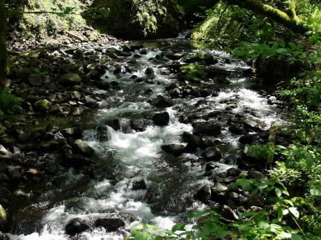 along the trail to Bridal Veil Falls, Columbia Gorge, OR